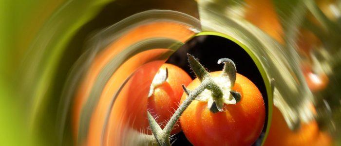 Tomatoes du soir